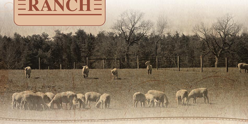 A&M Ranch • Sandwich, Illinois